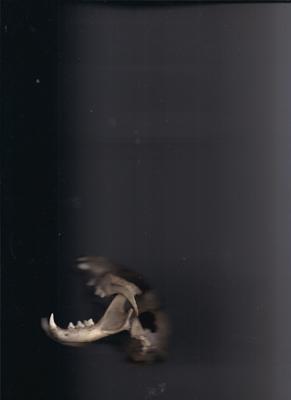 #skull #katzenschädel #schädel #bones #knochen #scan #objectscan #corpusdelicti #annegeorgius