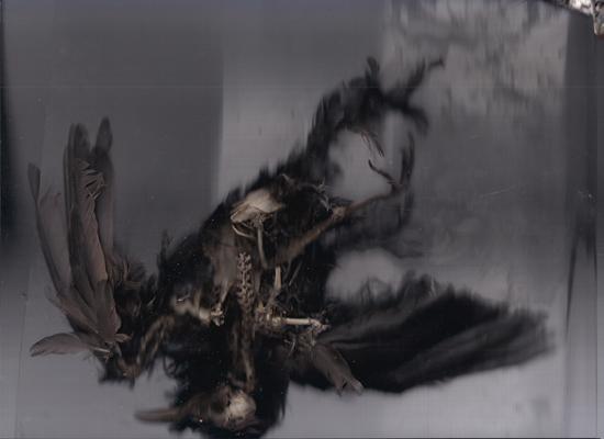 #bird #birdskeleton #vogelskelett #bones #knochen #scan #objectscan #corpusdelicti #annegeorgius