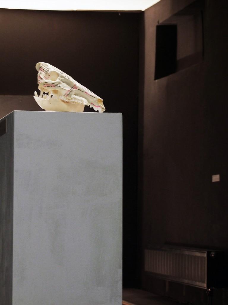 #einzelausstellung #konserven #sinnträger #tattoo #leipzig #medienkunst #installation #präparate #methylsalizylat #fische #fledermaus #kohlmeise #wildschwein #skull #alufolie #aluminiumfolienabdrücke #facebook #comment #spine #rehbock #cranium #apperzeption #konservierung #octopus #pelz #pelzkragen