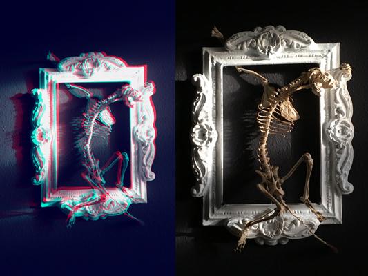 #anaglyph #stereoscopic #stereoskopie #framed #frame #racoon #racoonskeleton #waschbär #skelett #skeleton#annegeorgius #corpusdelicti #principia.discordia