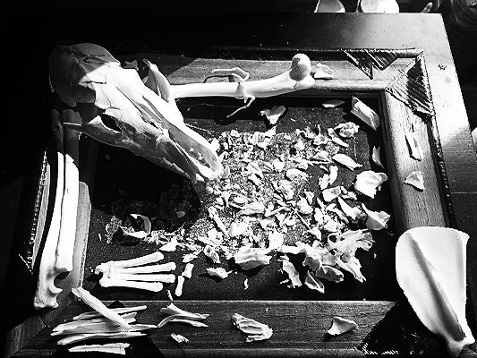 #skull #fox #puzzle #inprogress #runover #annegeorgius #corpusdelicti #principia.discordia