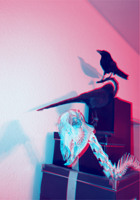 #deer #crows #stereoscopic #stereoskopie #annegeorgius #corpusdelicti #principia.discordia