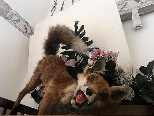 #fuchs #fox #dermoplastik #präparat #taxidermy #taxidermie #annegeorgius #corpusdelicti #principia.discordia