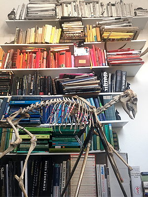 #reh #skelett #skeleton #deer #annegeorgius #corpusdelicti #principia.discordia