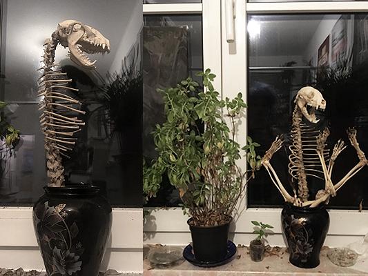 #racoon #skeleton #waschbär #skelett #plant #boneplant #knochen #knochenblume #pflanze #annegeorgius #corpusdelicti #principia.discordia