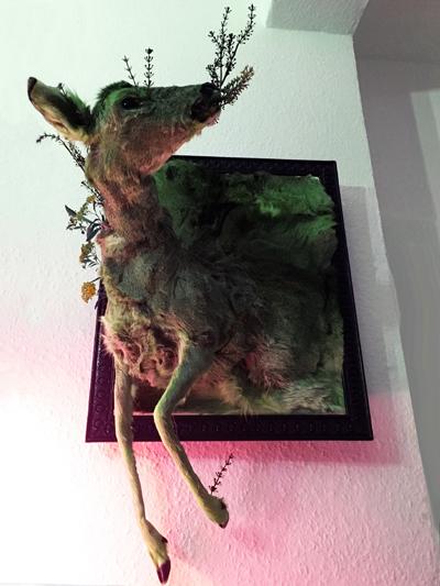 #dermoplastik #skin #deerskin #rehdecke #reh #haut #deer #framed #annegeorgius #corpusdelicti #principia.discordia