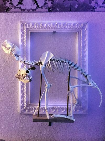 #skull #fox #cerberus #skeleton #twoheaded #annegeorgius #corpusdelicti #principia.discordia