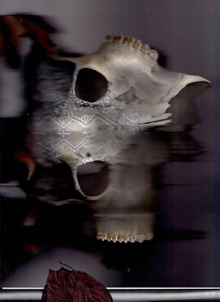 #reddeer #reh #schädel #deer #deerskull #rehkopf #bones #knochen #scan #objectscan #corpusdelicti #annegeorgius